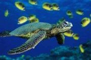 Nadamos entre tortugas marinas y tiburones solrayo en EcoFLE