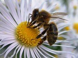 Avispas y abejas en las curiosidades del TEOREMA DE LA Ñ esta semana
