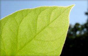 EcoFLE